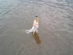 Walleye Assassin 2