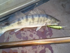 Walleye deep BANDIT 8 м